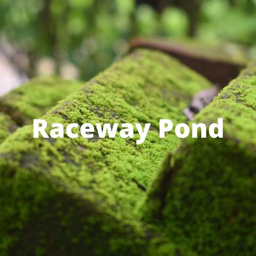 Raceway Pond