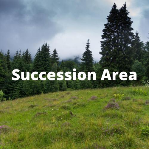 Succession Area